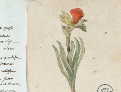 Boekpresentatie 'Planten op papier'